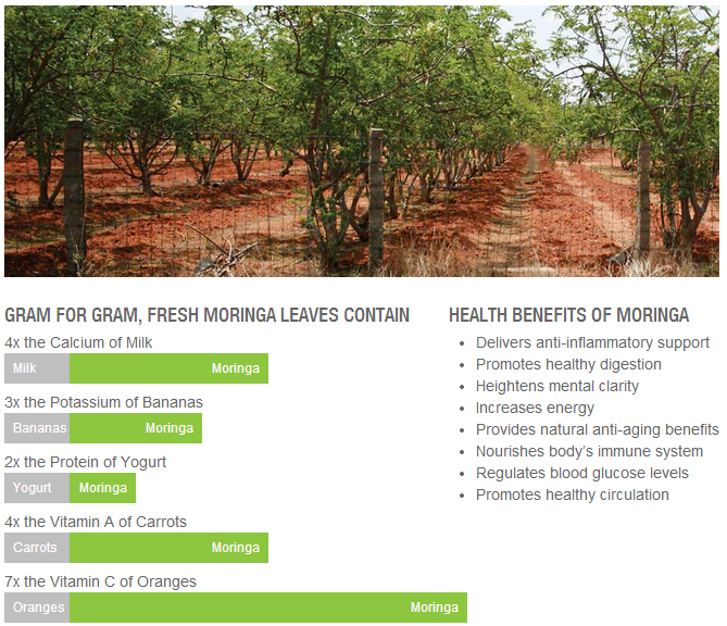 Health-Benefits-of-Moringa